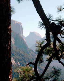 Benny's Yosemite Window