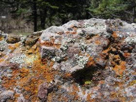 Lichen digesting granite boulder